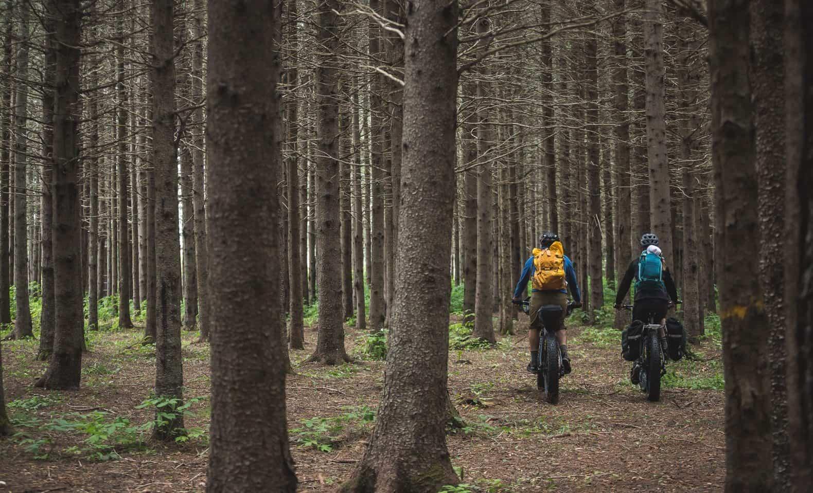 Une aventure en fatbike de bikepacking dans une forêt de conifères en Gaspésie