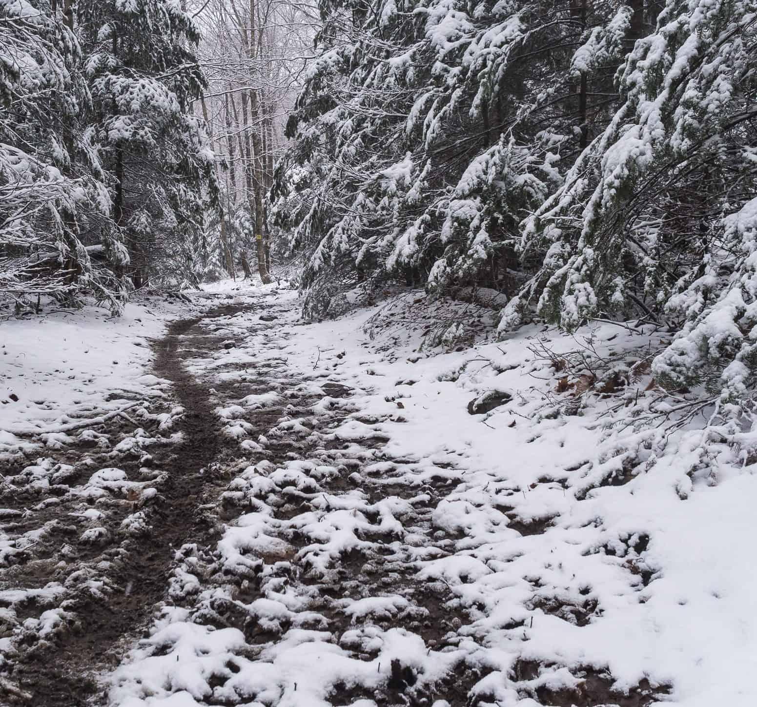 Une trace dans la neige laissé par un fatbike lors d'une randonnée en forêt